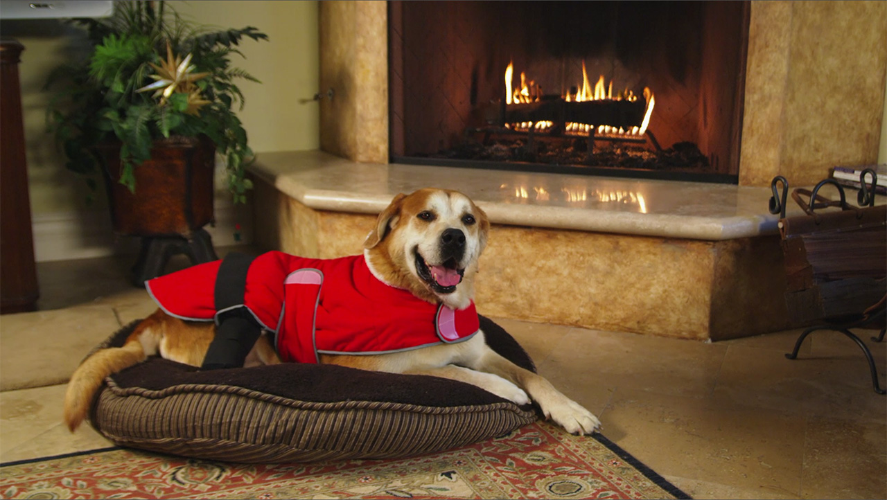 dog wearing a therapy jacket at a fireplace for product videographer